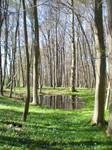 Woodruff beech forest: Habitat overview IV