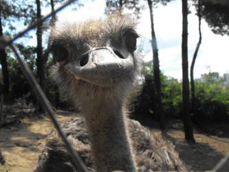 ostrich by barkbathory