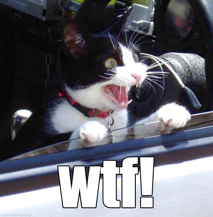 Las mejores imagenes graciosas de internet