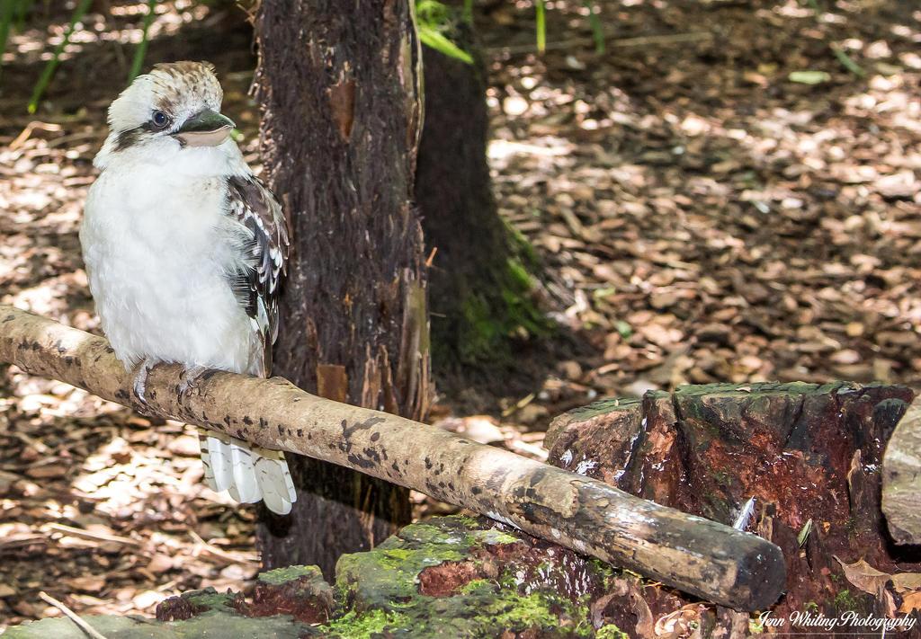 Australia Zoo 02 by aragwen