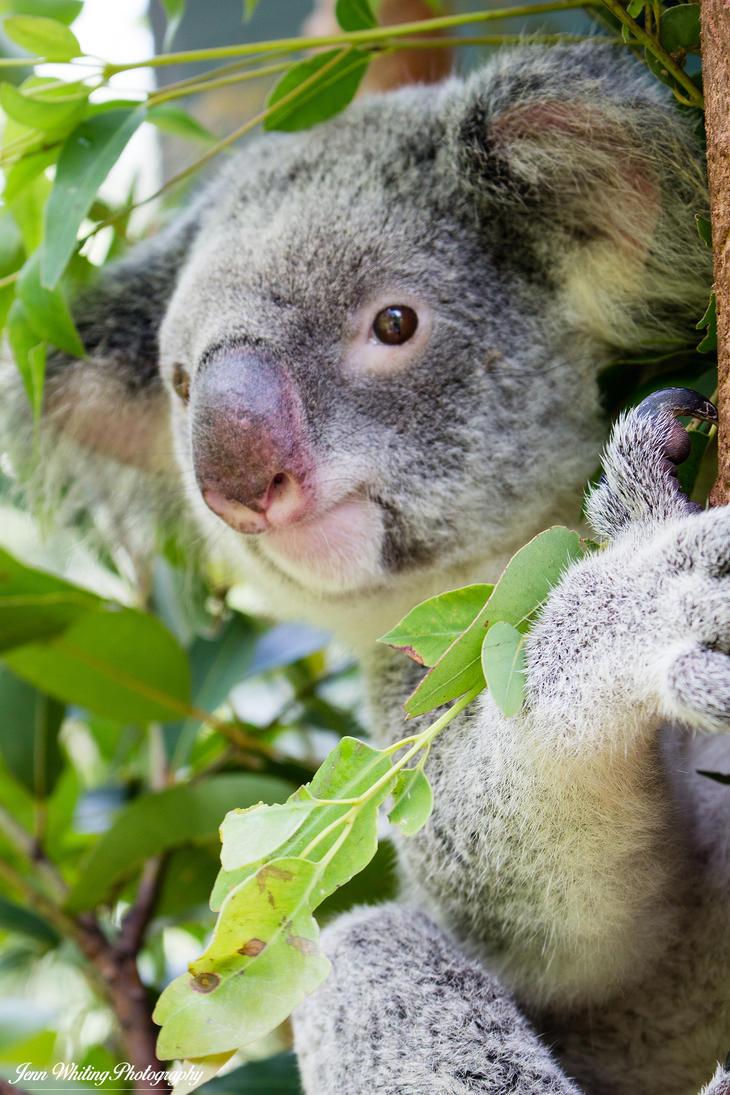 Australia Zoo 03 by aragwen