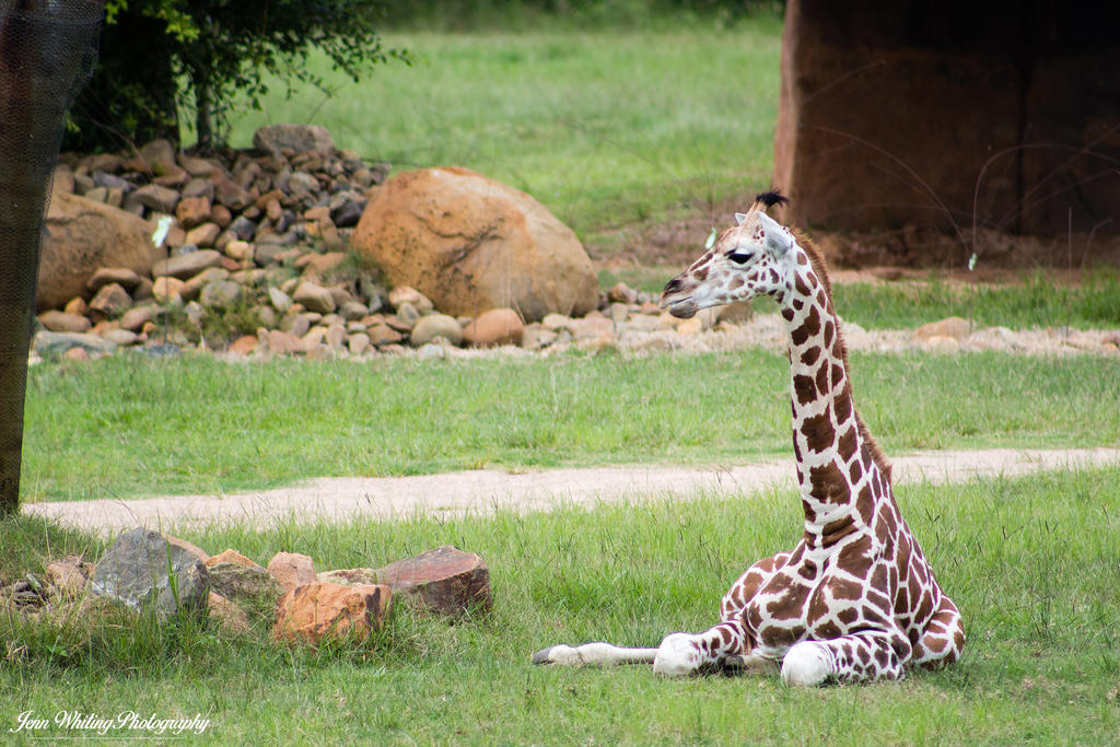 Australia Zoo 04 by aragwen