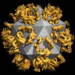 Icosahedral Dragons