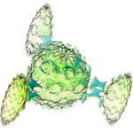 The Trans-Neptunian Cucumber