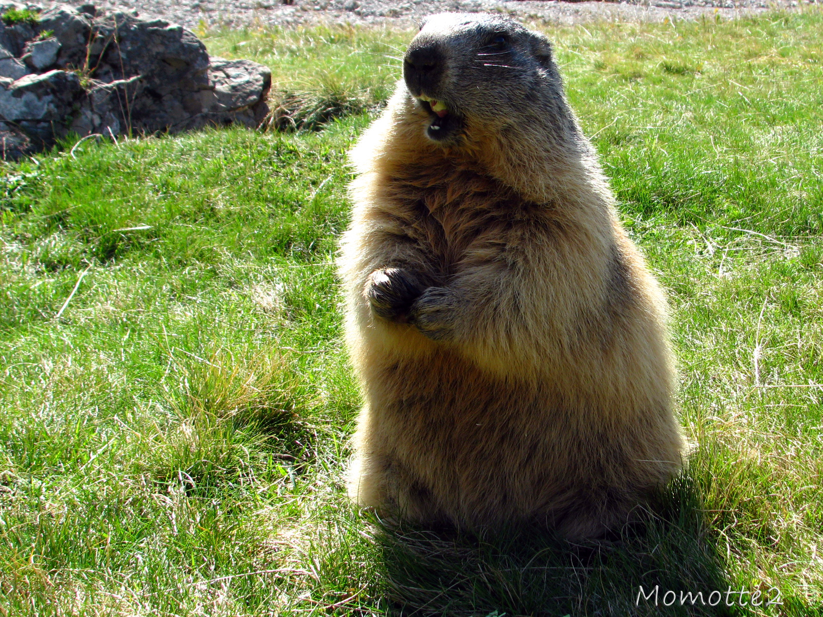 punxsutawney chat Small town in pennsylvania about 80 miles northeast of pittsburgh home of punxsutawney phil, the famous groundhog (woodchuck) every feb 2 (candlemas), there is a huge gathering at gobbler's knob to see if phil will see his shadow.