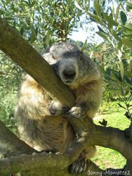 Bonny the marmot in a tree by Momotte2