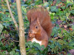 Sunday lunch for squirrel