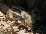 Hide-and-seek with baby boar