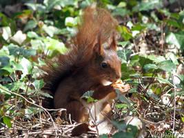 Happy squirrel by Momotte2