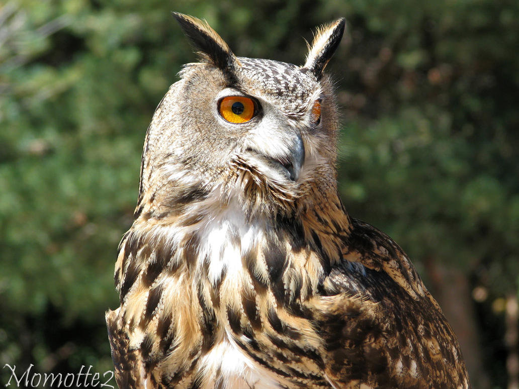 Majestic owl by Momotte2
