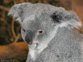 Tender koala by Momotte2