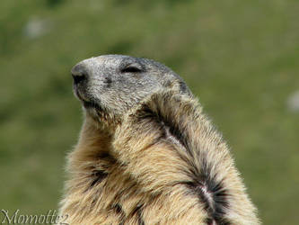 Groundhog Day 2012 in the wind by Momotte2