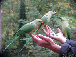 Three lovely green friends