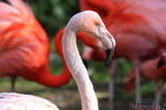 In the eye of the pink flamingo
