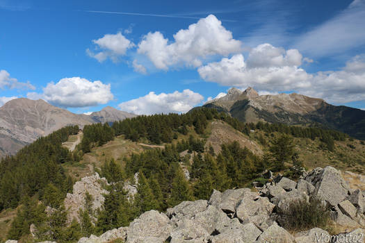 Back from Alpine Paradise