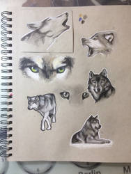 Wolf sketches by MarcoHauwert