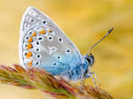 Butterfly Blue Yellow by Bhesi