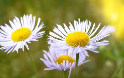 Summer Flower by Bhesi