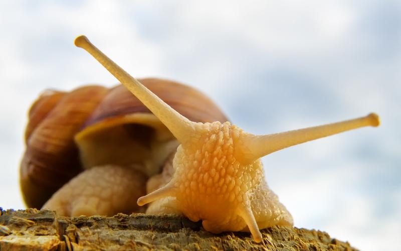 Roman Snail by Bhesi