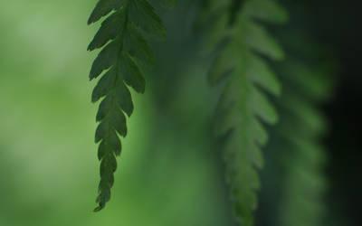 enjoy green