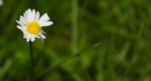 Daisy Chains Await by Mya-Kat
