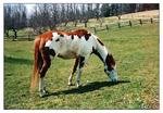 Hidalgo - The Real Horse