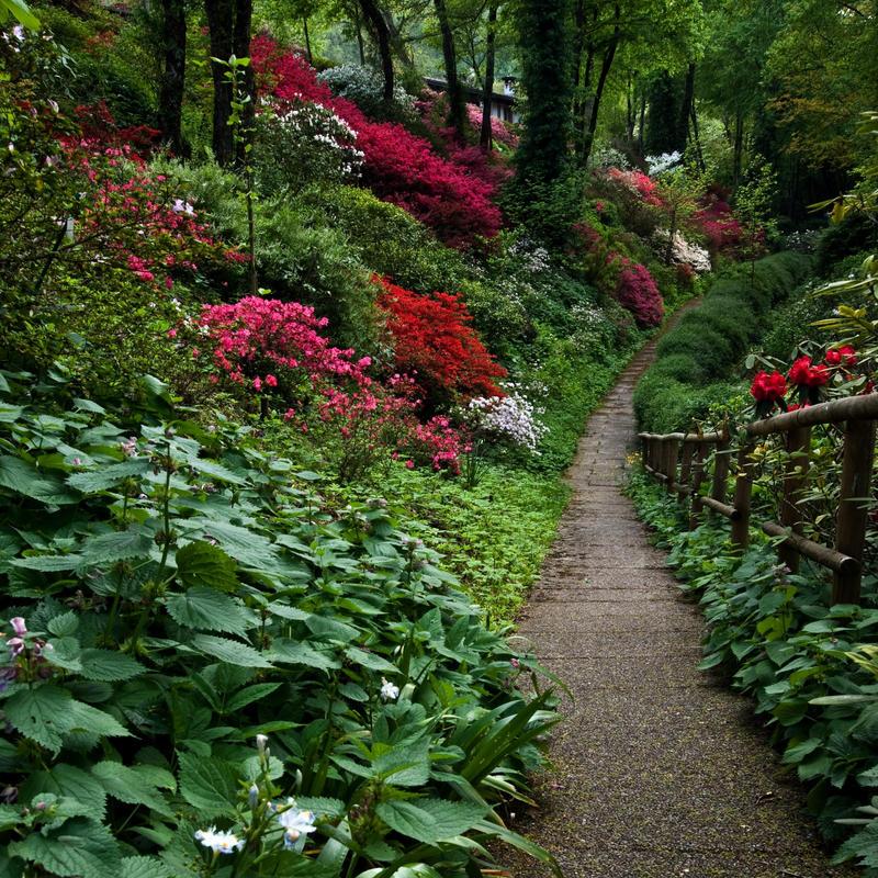 Garden Of Eden By Shinywish On Deviantart