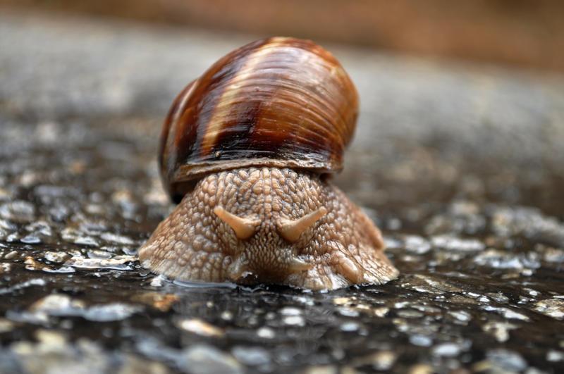 snail is looking by aydnahmet