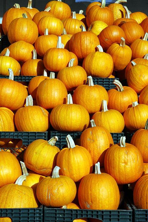 Pumpkin love by JonBeanHastings