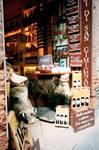 A shop boar by SilverMixx