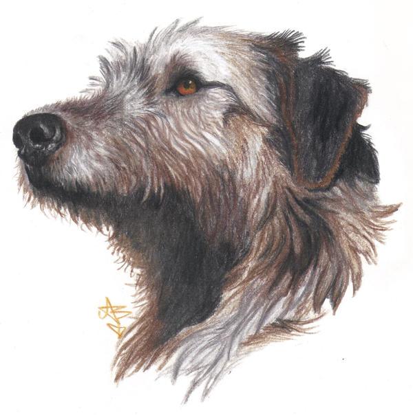 Irish Wolfhound portrait by HonestAnxiety