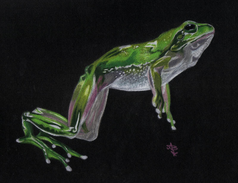 Frog - renewed by HonestAnxiety