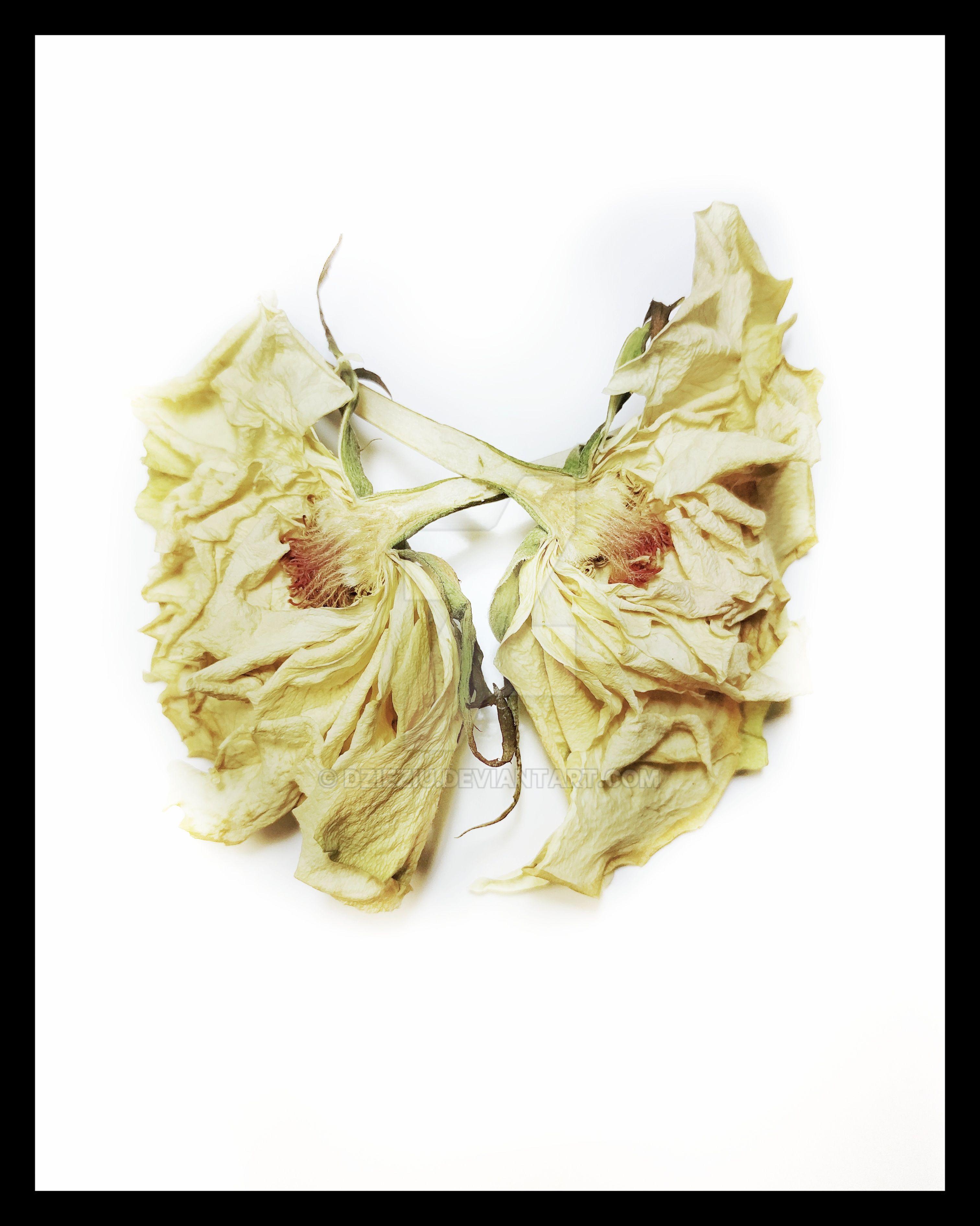 Flower Body Anatomy Album No 5 by Dzieziu on DeviantArt