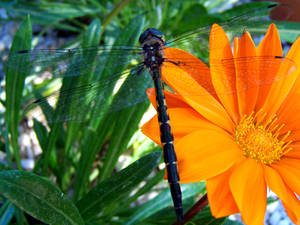 Insect 2_Dragonfly - Stock