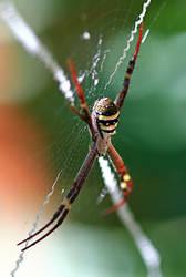 Spider 4 - Stock