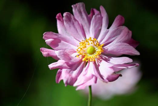 Flower 8 - Stock