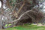 Background_Trees 3 _ Stock