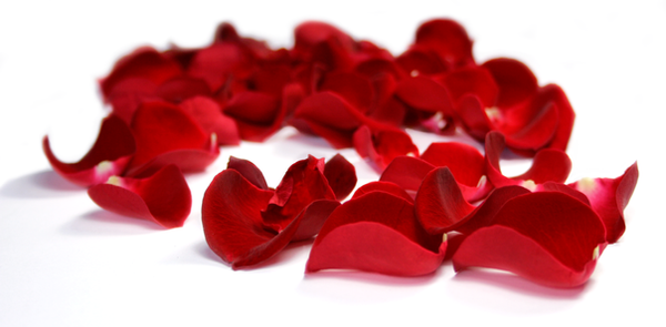 Flower 12_Rose Petals - Stock by Inadesign-Stock