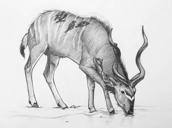 Kudu with Birds by unusualworlds