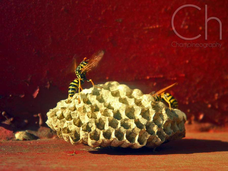 Bzzzzzz by Champineography