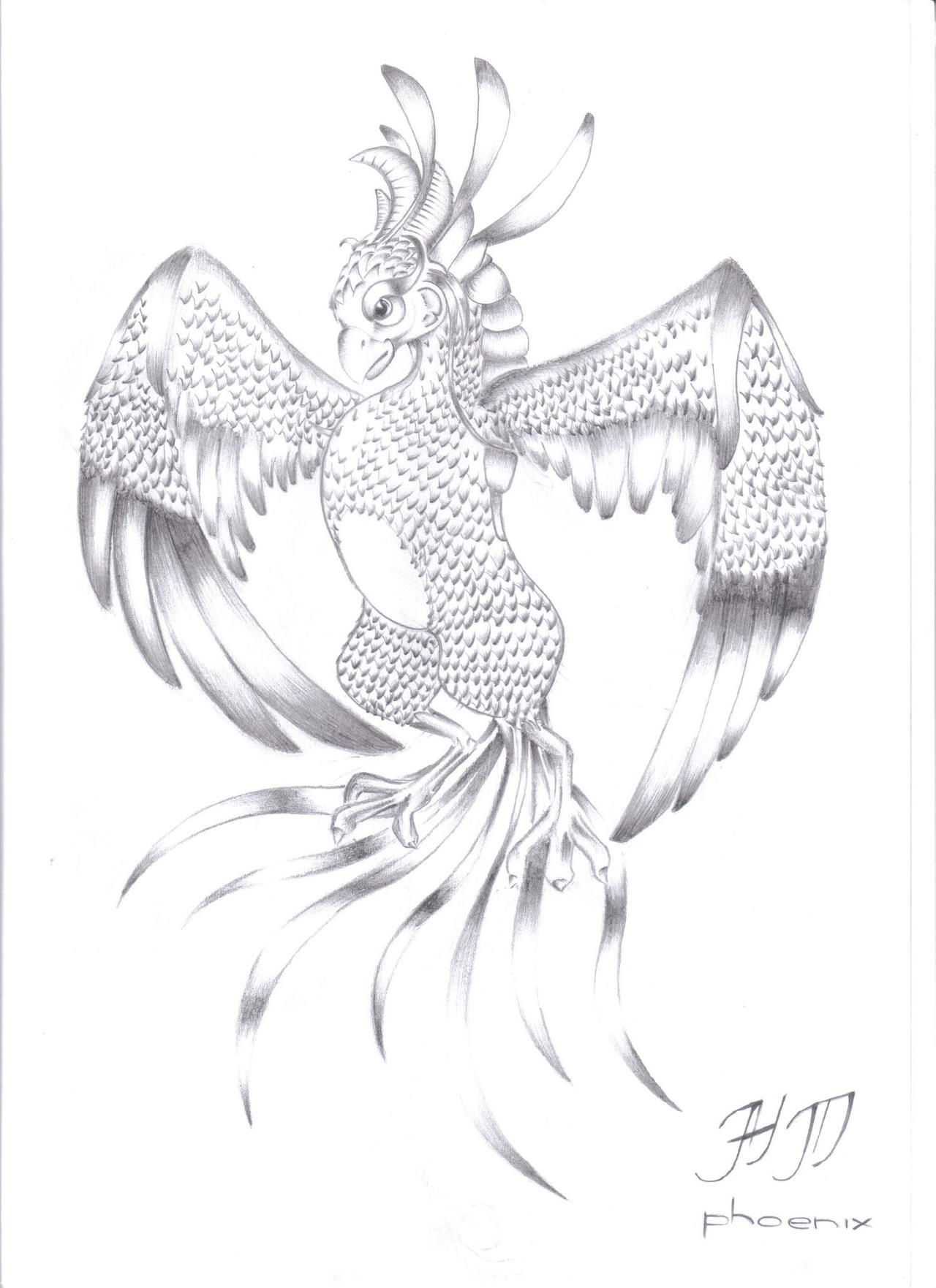 Phoenix Pencil Drawing by danielso1 on DeviantArt