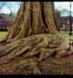 Dig Roots Dig by TheLong
