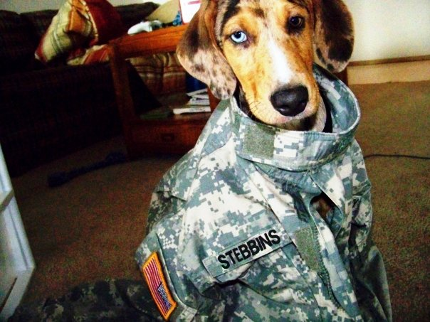 soldier dog by HMJS-Photography