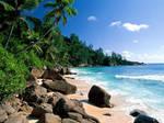 Palm-trees-beach