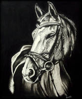 Horse Portrait. by Arunava-Art
