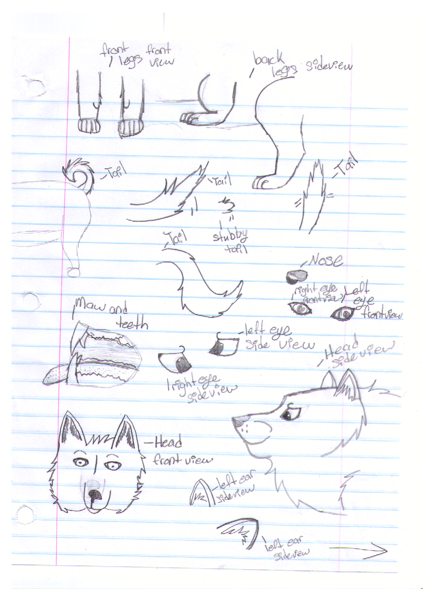 How i draw the parts of a wolf or dog by sky1213 on deviantart how i draw the parts of a wolf or dog by sky1213 pooptronica