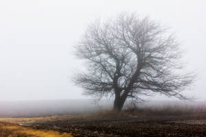 Heavy Fog on the Prairie by pubculture