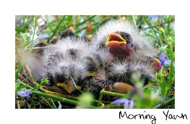 Morning Yawn by jackel15