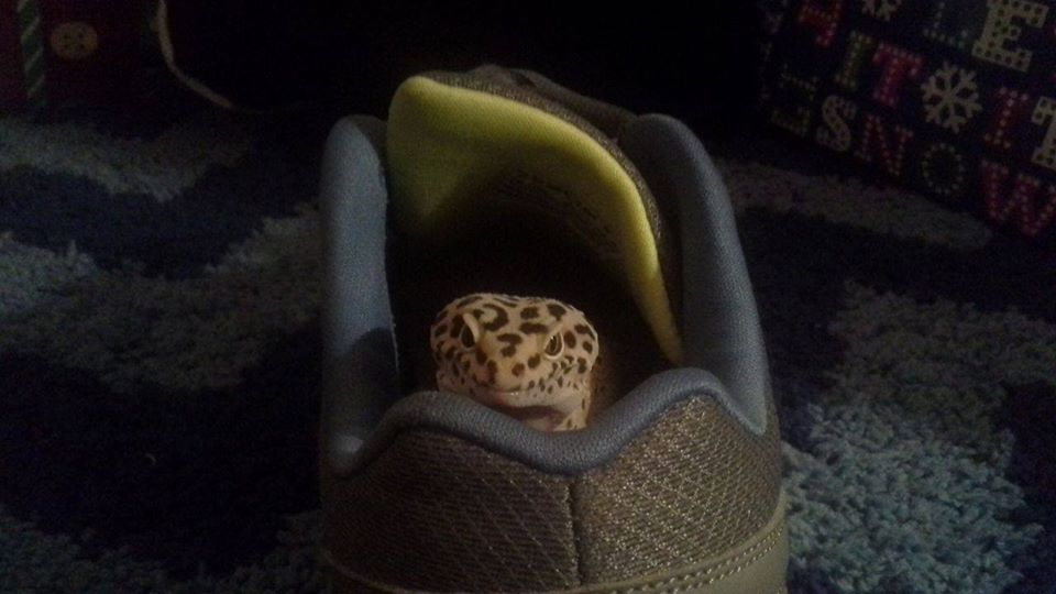Geckoe Shoe by GECK0e