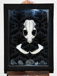 Mink Skull Shadowbox w/ Quartz Crystals by kittykat01